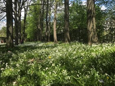 Next to Osborne Garden
